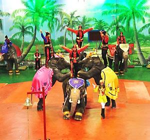 코끼리쇼+바나나주기