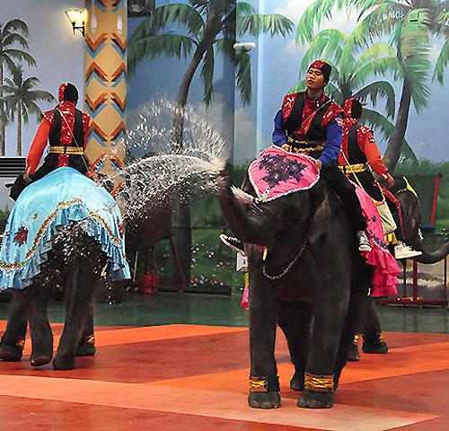 점보빌리지(코끼리쇼)